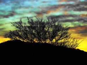 Tree at Sun Up