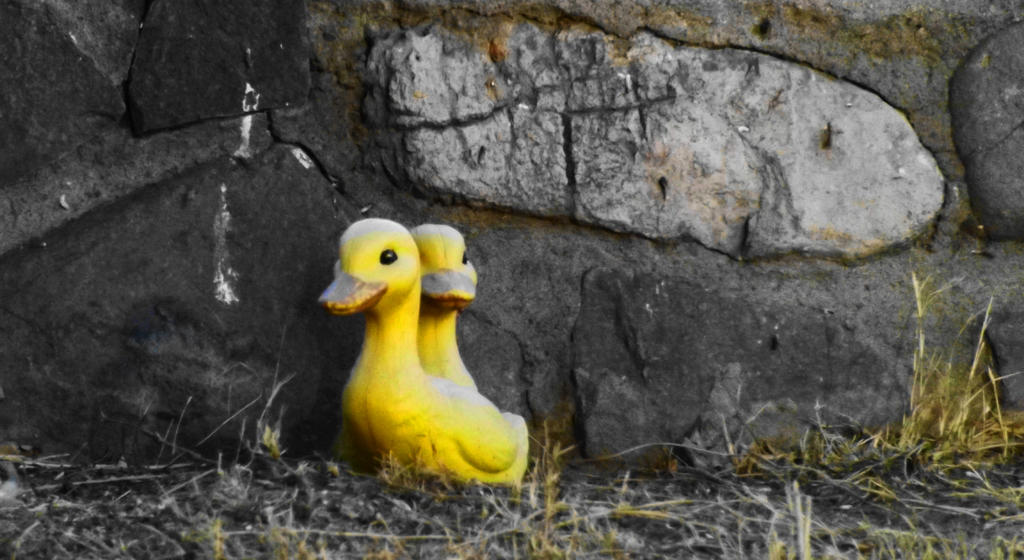 My Rubber Duckie by SharPhotography