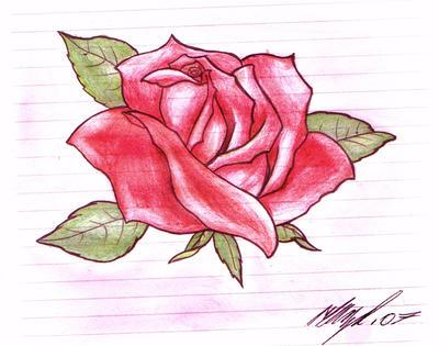 rose tattoo design. Rose Tattoo Design by