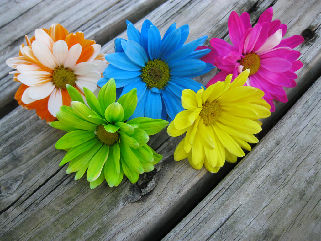 Colored Daisies 28 Images Multi Colored Stock Photo Image Of Beautiful Of The Day Colorful
