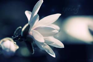 .:: spring ::. by grinzekatze