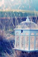 birdcage by grinzekatze