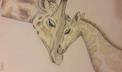 Mother and Baby Giraffe by hannxm