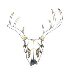 Stag skull by hannxm