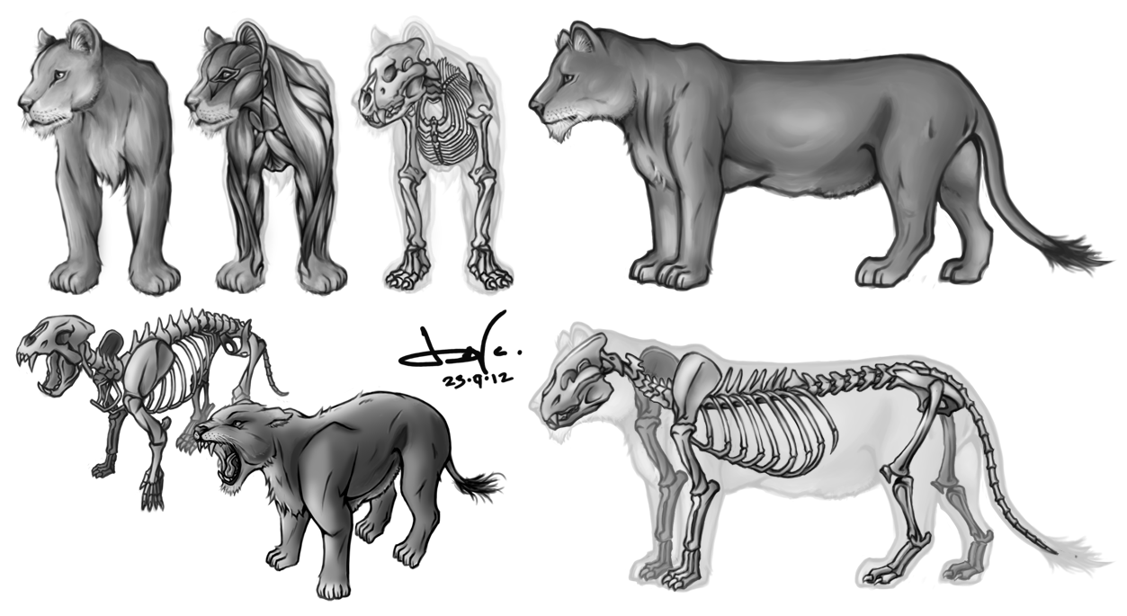 Animal Anatomy Study - LIONESS by CHOBI-PHO on DeviantArt