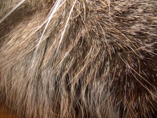Lynx Fur Texture