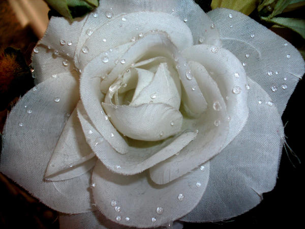 White Fabric Rose by Rubyfire14-Stock