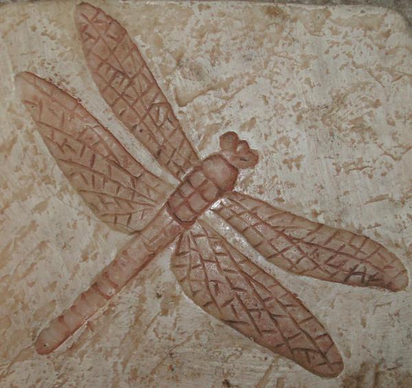 Dragonfly Coaster by Rubyfire14-Stock