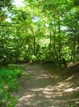Woods-6