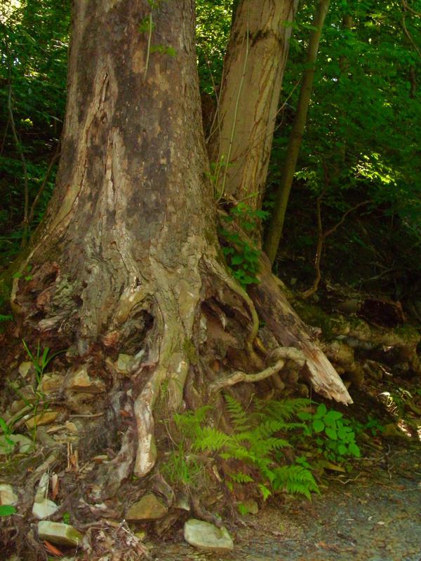Woods-2 by Rubyfire14-Stock