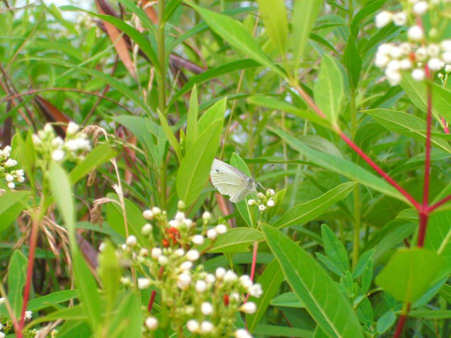 Fairy Land of Butterflies by Rubyfire14-Stock