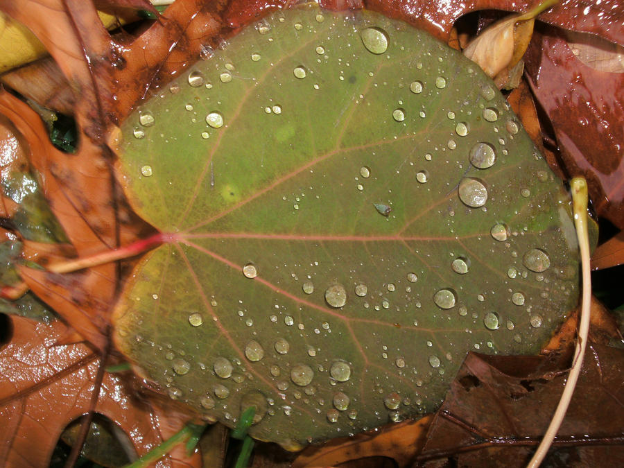 Raindrops on Leaf by Rubyfire14-Stock