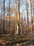 Fall Woods-2