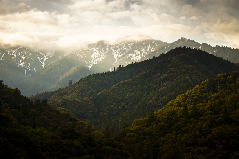 Morning in Sequoia.01 by Monque