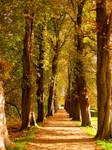 Memory Lane by Lilleninja