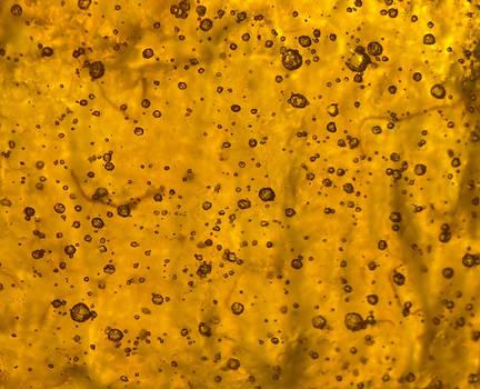 Orange Cells