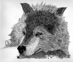 Inked Wolf by Kijayz