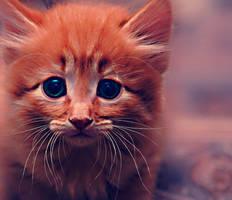 kitten by lamb-OfGod