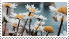 daisy stamp by catstam