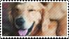 golden lab stamp by catstam