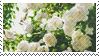 White Flower stamp