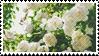 White Flower stamp by catstam