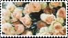 Cream Roses stamp