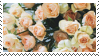 Cream Roses stamp by catstam