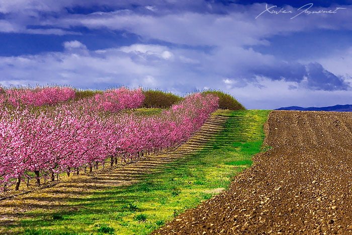 Flowers of March by XavierJamonet