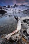 Dead tree on Allos Lake