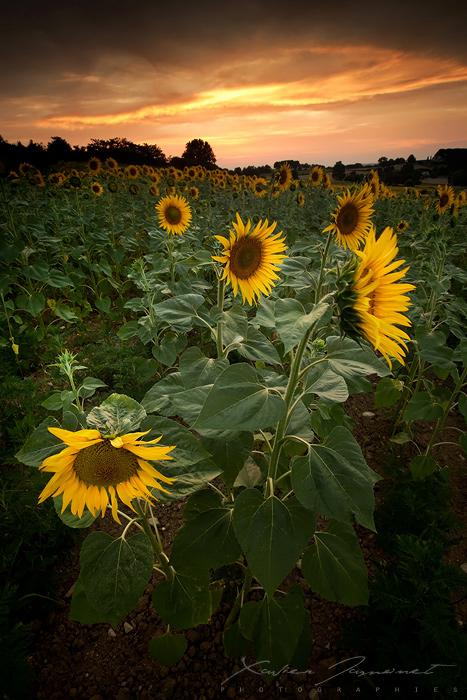Summer Light by XavierJamonet