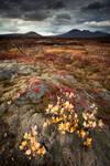 Colors at Thingvellir