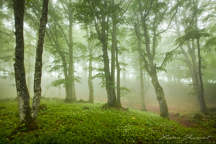 Misty Forest by XavierJamonet