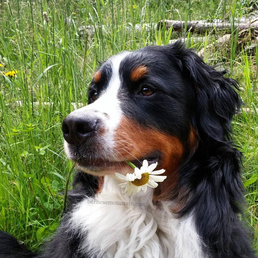 flower_by_duskregn-dcddas6.png
