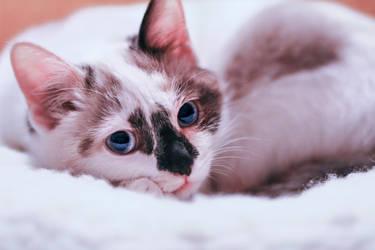 My cat by klariFilth