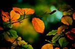 autumn look by nicKram