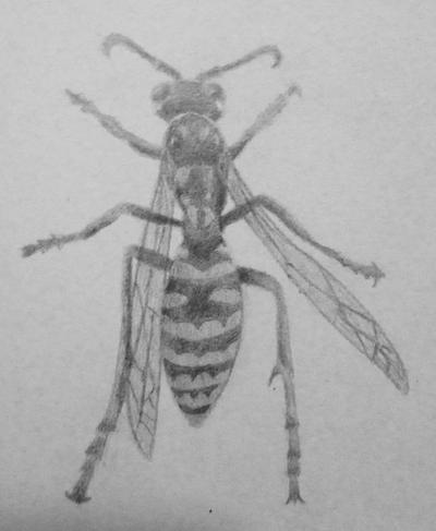 Wasp Sketch by KrissyM0922