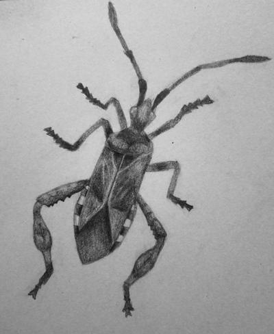 Bug Sketch by KrissyM0922