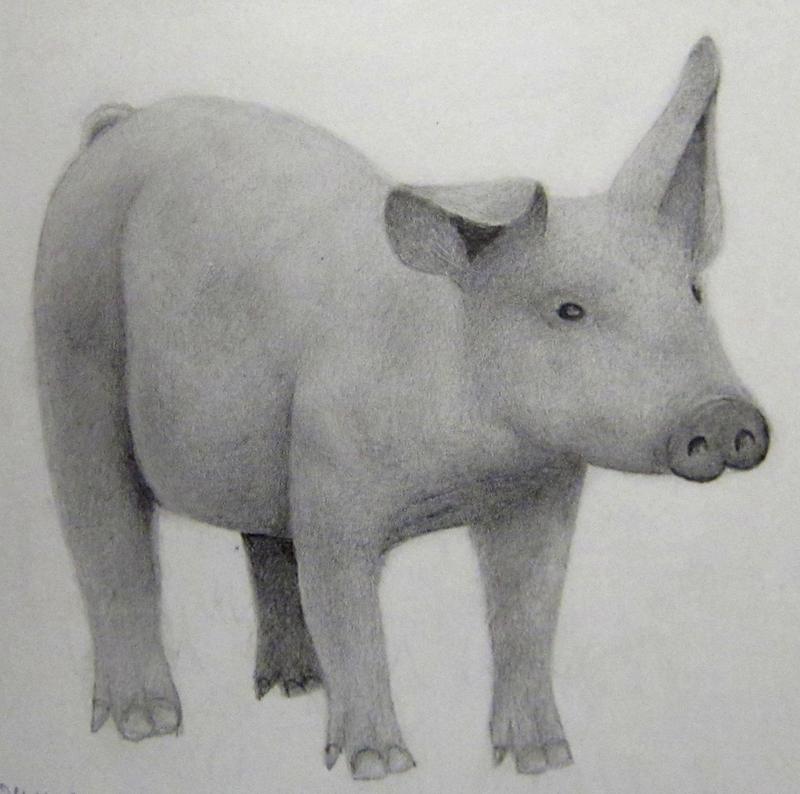 Realistic Pig Sketch by KrissyM0922