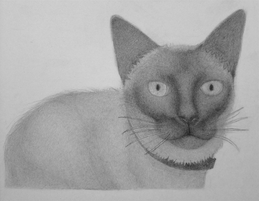 Skittles the Siamese Cat by KrissyM0922