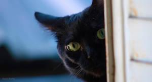 Maya th cat