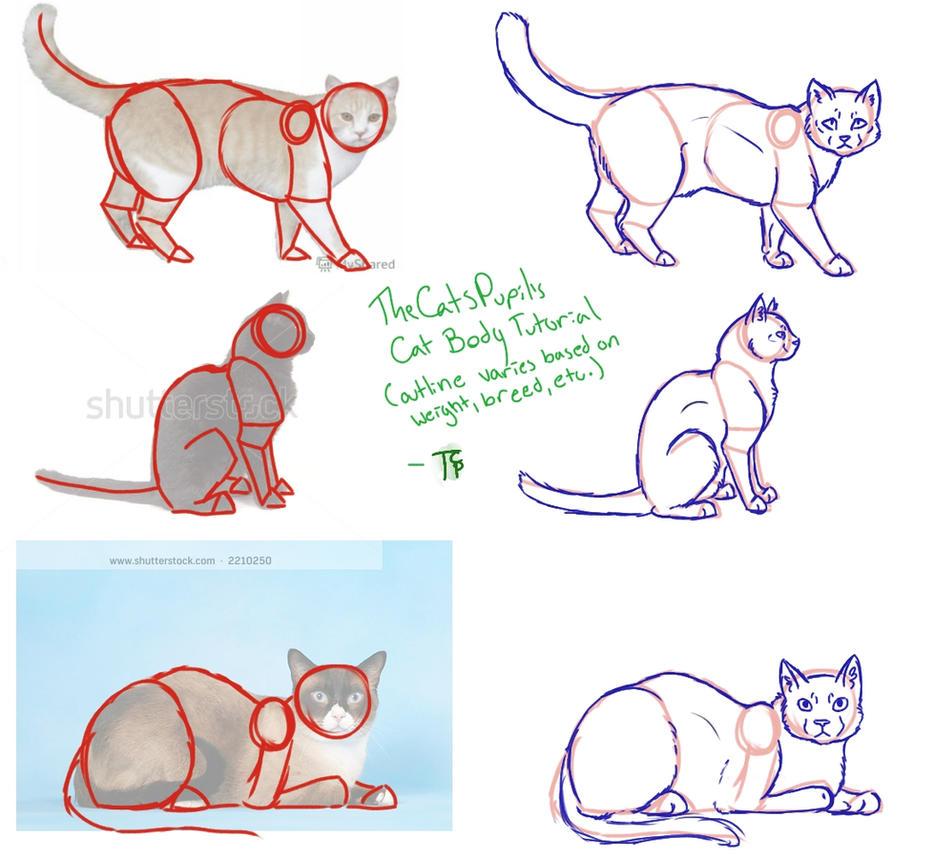Cat Body Tutorial by TheCatsPupil on DeviantArt