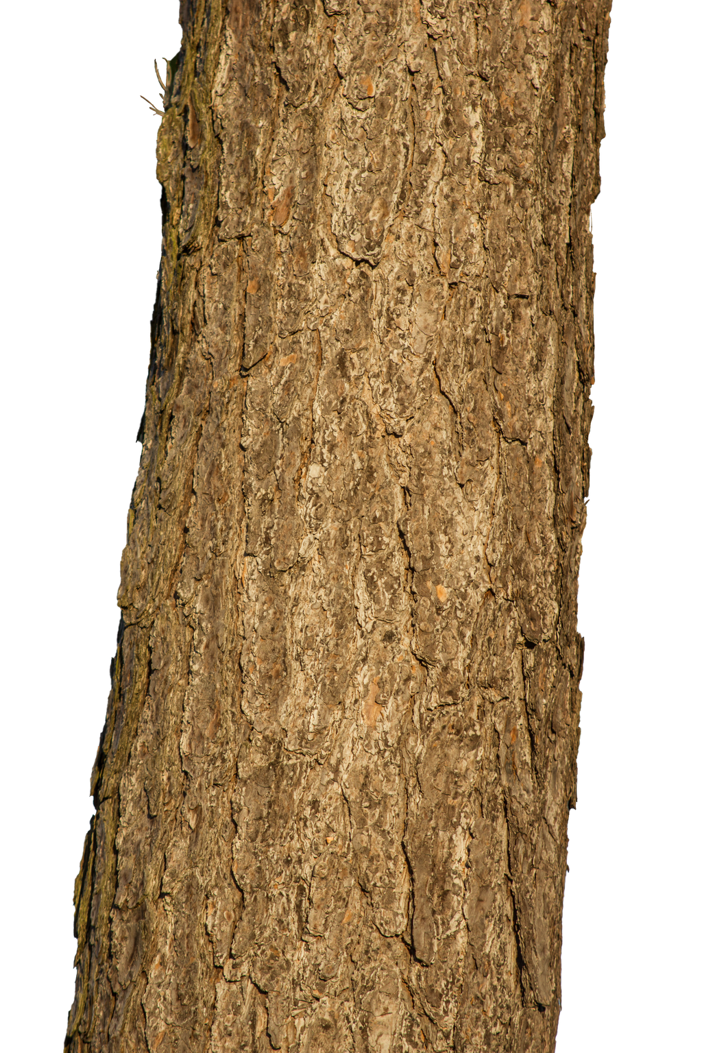 Tree trunk by luguerdxis on deviantart for Tree trunk uses