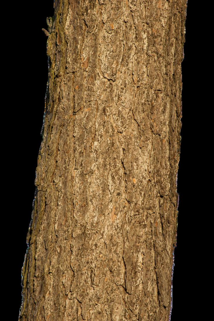 Tree trunk by LuguerDxis on DeviantArt