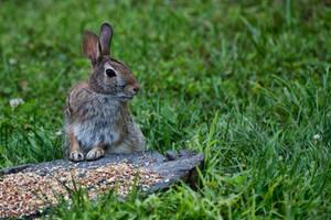 Bunny!!! by TomFawls
