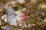 Stealth Chicken