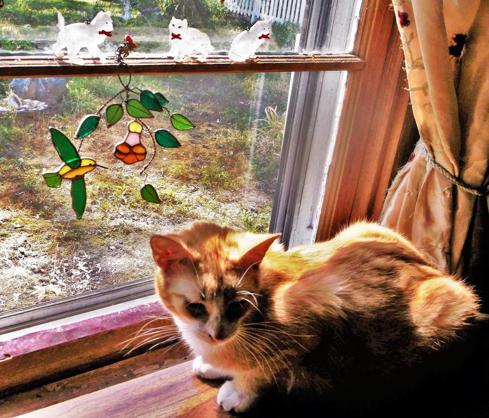 Butterscotch in the kitty window by MystMoonstruck