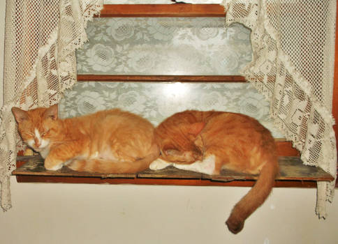 Brothers Butterscotch and Twinkie framed in lace