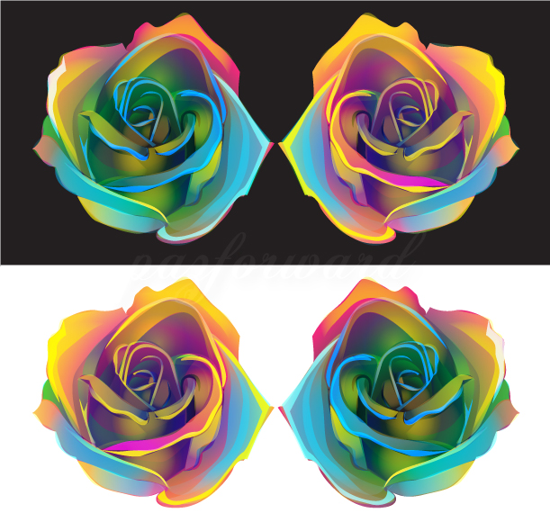 rose vector study by pazforward
