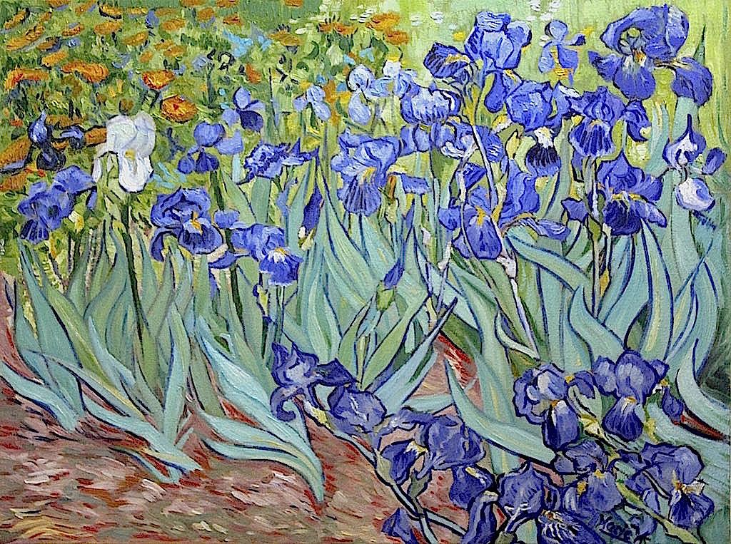Irises - van Gogh Study by Maciesowicz